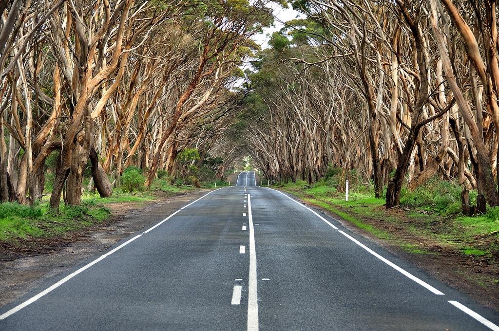 The Pioneer Road